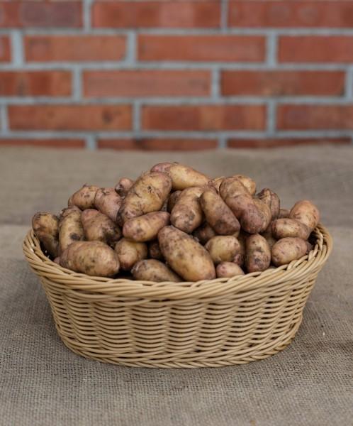 "Kartoffel ""Bamberger Krumbeere"" (festkochend)"