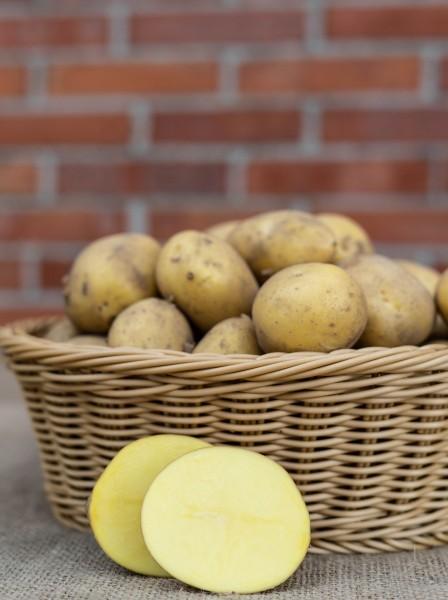 Kartoffel - Sorte Belana (festkochend)