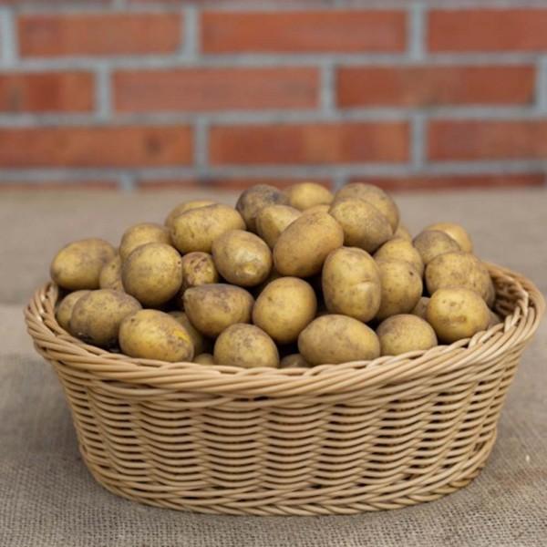 Kartoffeln Leyla 3