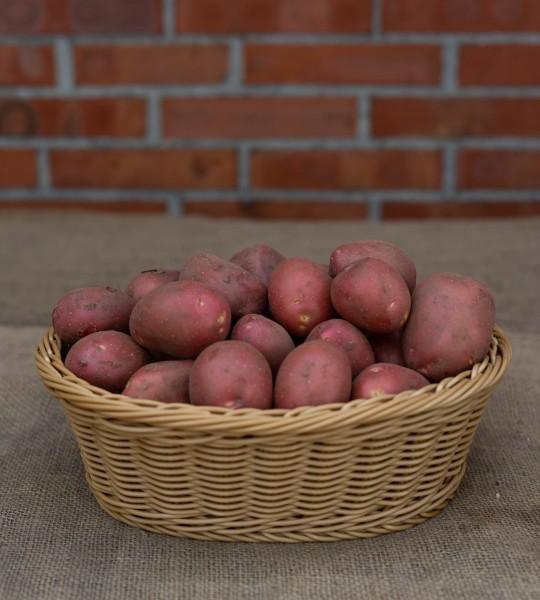 Kartoffel - Sorte Heiderot ( festkochend, rotfleischig)