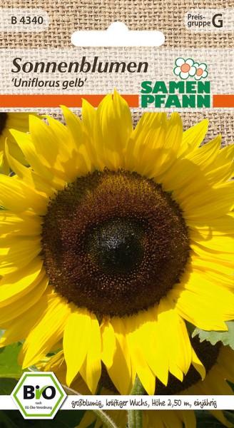 "Bio-Sonnenblume ""Uniflorus gelb"""