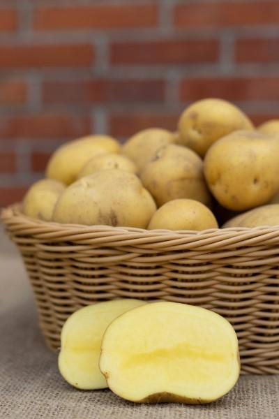 Kartoffel - Sorte Marabel (mehlig)