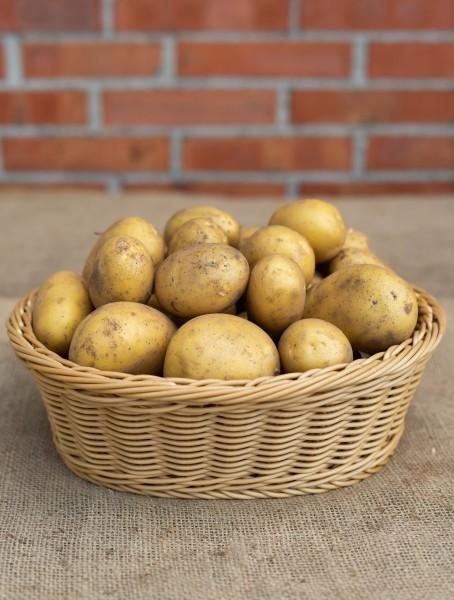 Kartoffel - Sorte Linda (festkochend)
