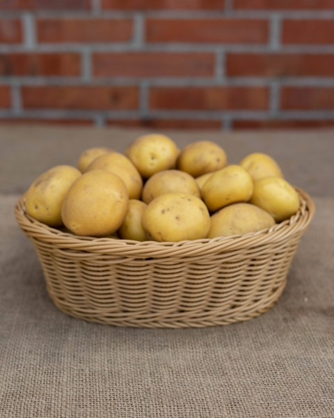 Kartoffel - Sorte Anuschka (festkoched)