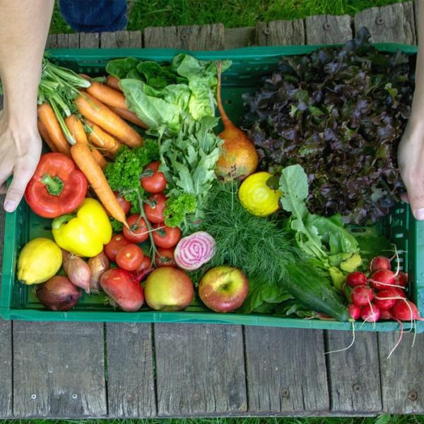 Frische Salat Kiste vom EytjeHof