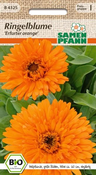 """Bio-Ringblume """"Erfurter Orange"""""""