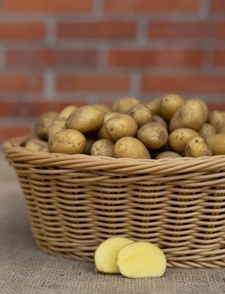 Kartoffel - Sorte Belana IV (Drillinge, festkochend)