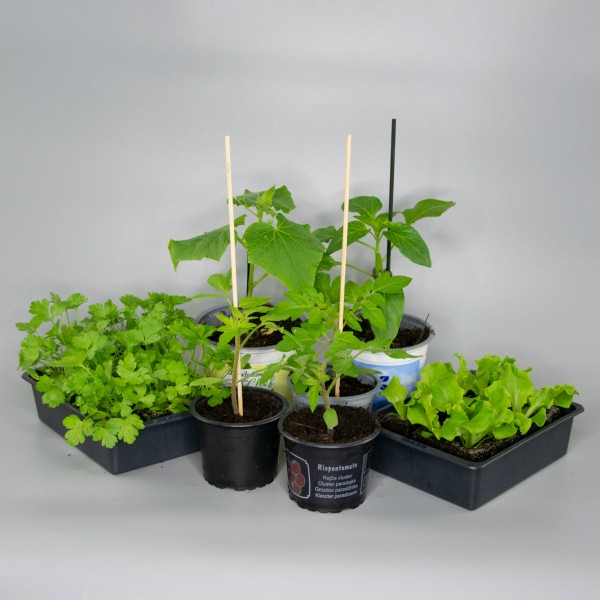 """""""Grow your own"""" – Box"""