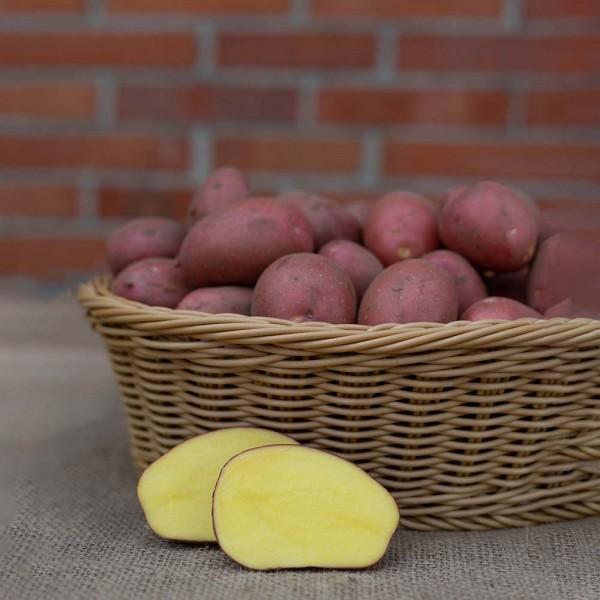 Kartoffel Laura