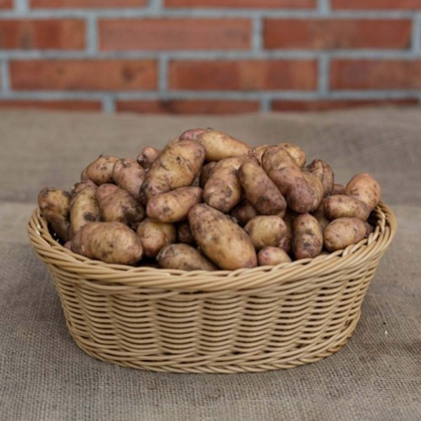 Kartoffeln Bamberger Krumbeere