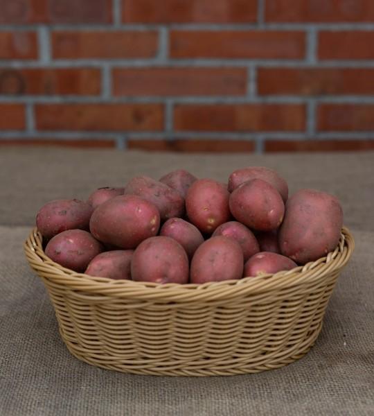 Kartoffel - Sorte Laura (vorwiegend festkochend)