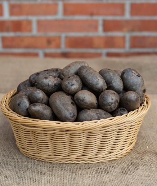 """Kartoffel """"Blaue Anneliese"""" festkochend"""