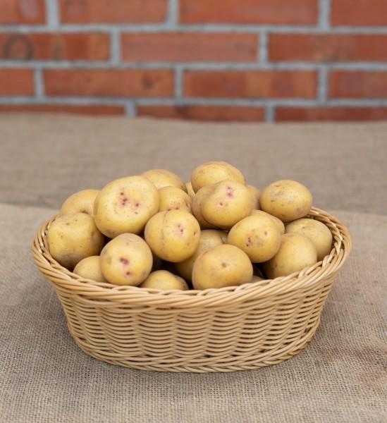 Kartoffel - Sorte Augusta (mehlig)